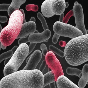 Kontaktinių lęšių skystis pašalina bakterijas